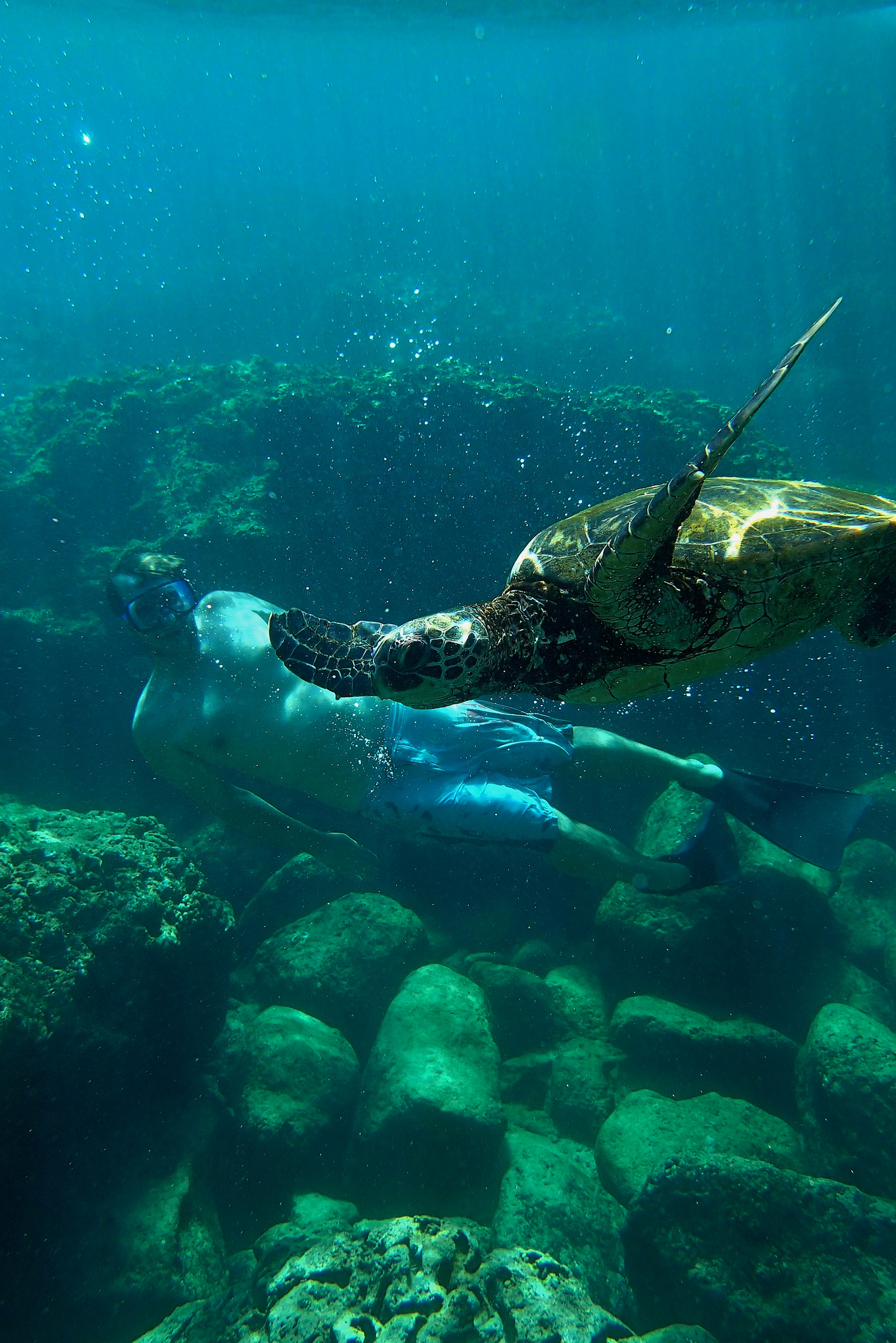 Swimming Turtle Related Keywords & Suggestions - Swimming Turtle Long ...