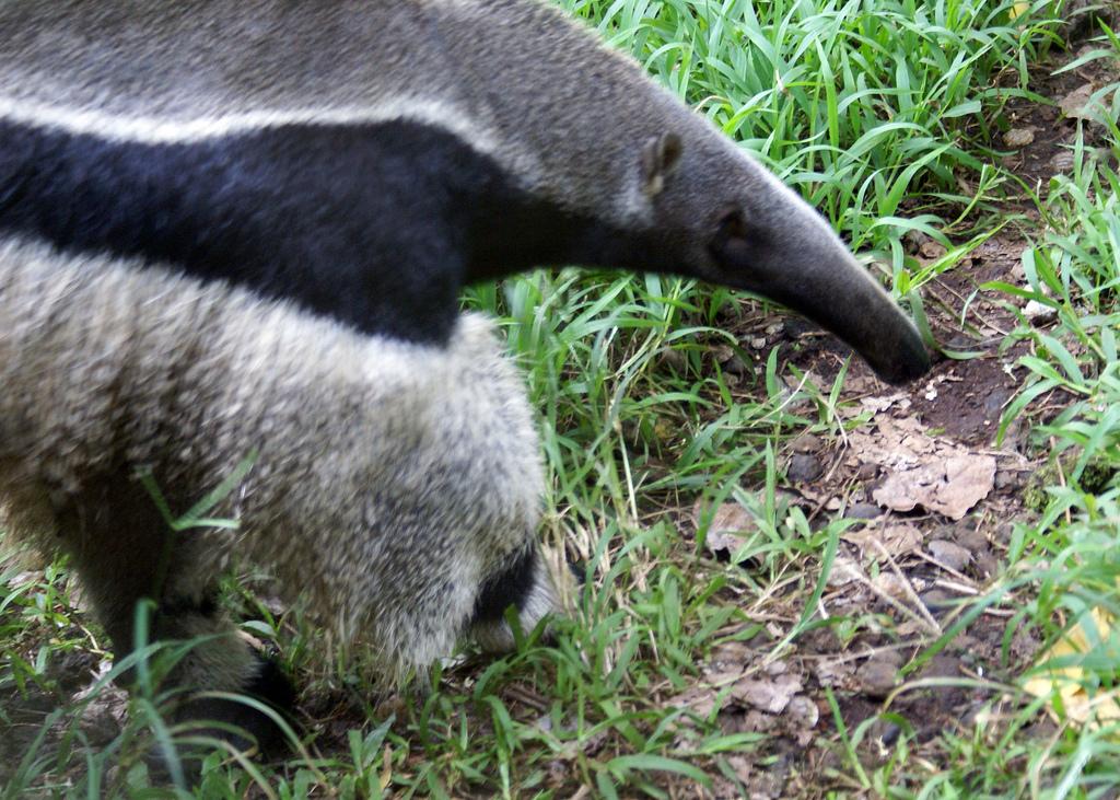 Panaewa Rainforest Zoo
