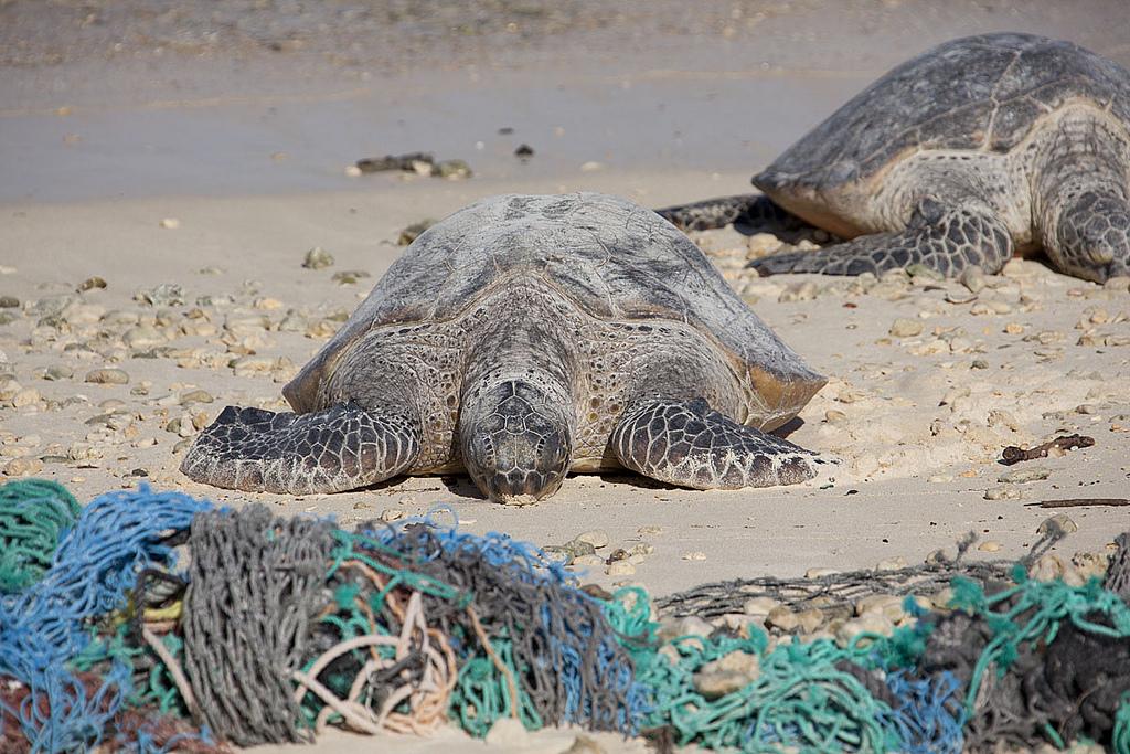 Papāhanaumokuākea Marine National Monument