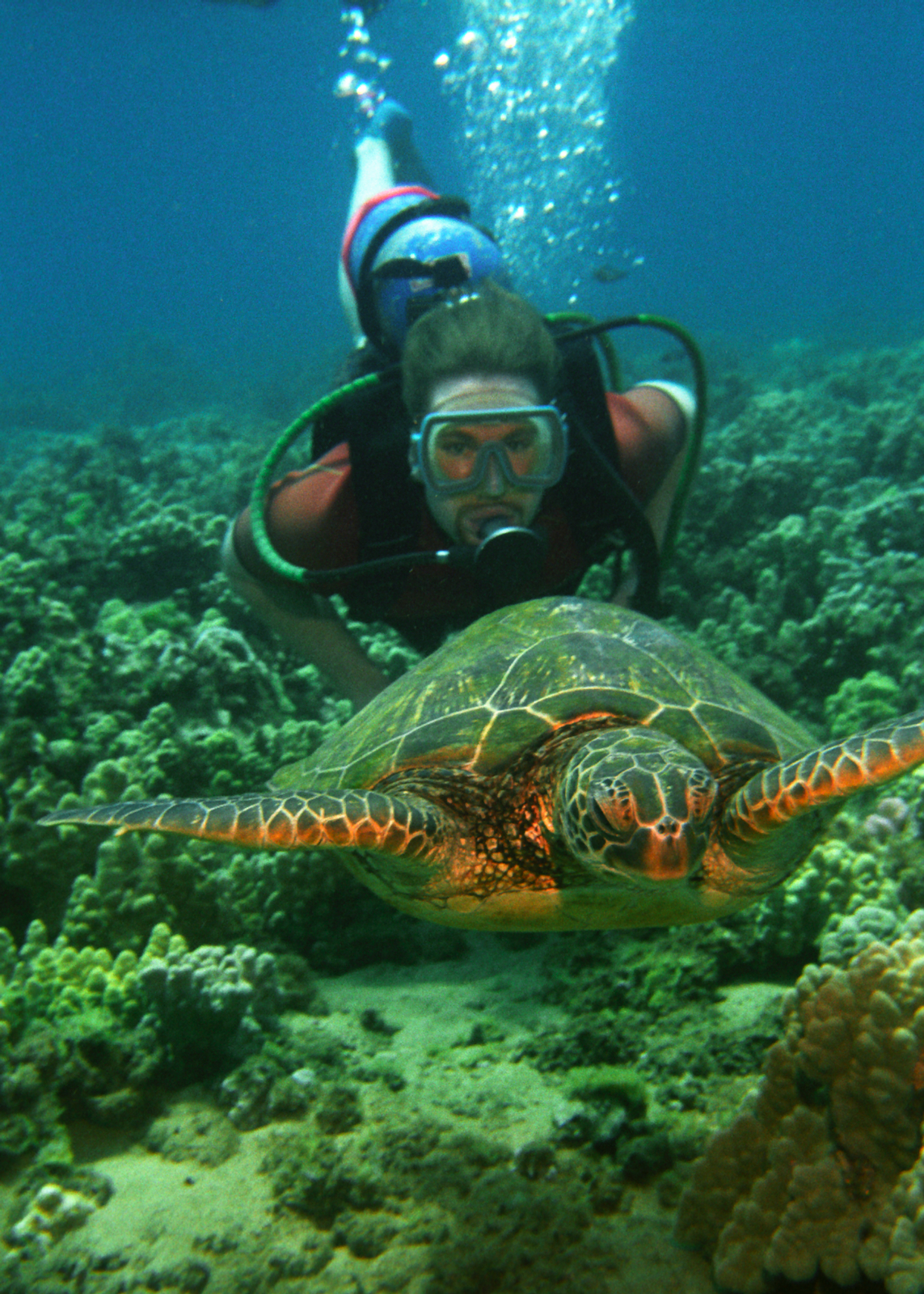 Swimming with sea turtles in hawaii hawaiian explorer - Dive in scuba ...