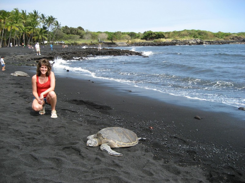 Green Sea Turtles At Punalu U Black Sand Beach Hawaii