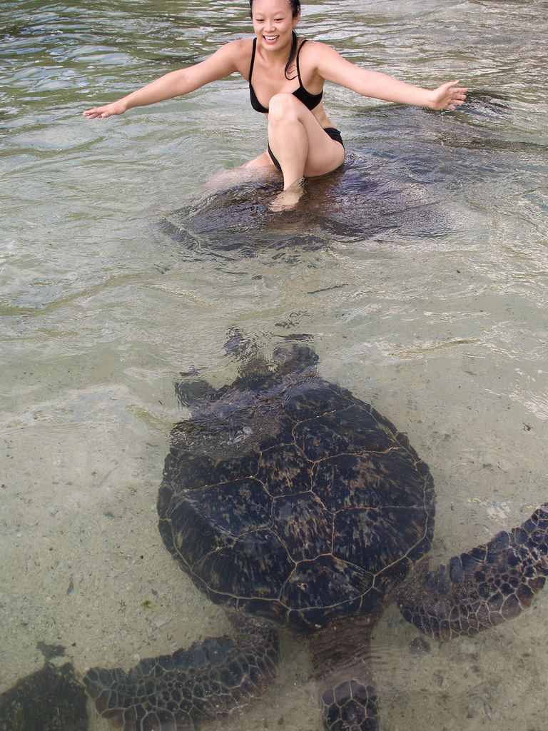 Swimming with Hawaiian Green Turtle
