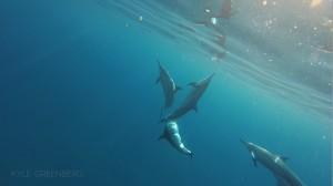 Kealakekua Scuba Diving