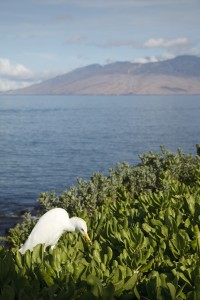 Maui Nature