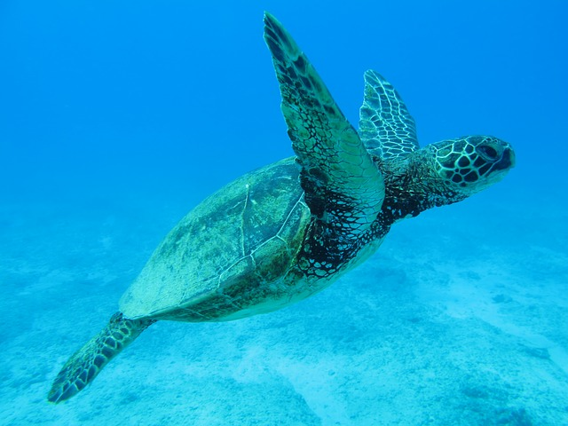 must-see dive sites for your trip to Hawaii